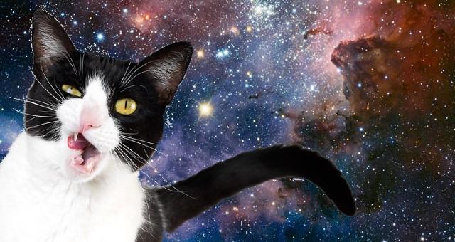Čierna mačička timblr