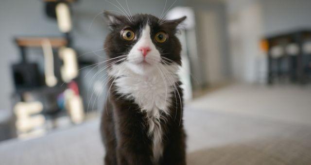 Sťahujeme mačku do nového domova – stres a panika
